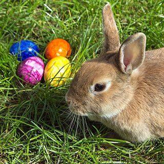 Eierlegendes Säugetier mit neun Buchstaben