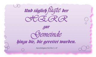 Read more about the article Gemeinde JESU – die Kleine Herde